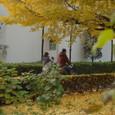 黄色い大学通り