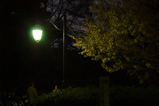 街灯とイチョウ