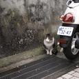 江ノ島の、やっぱり猫