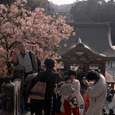 鶴岡八幡宮から見た風景