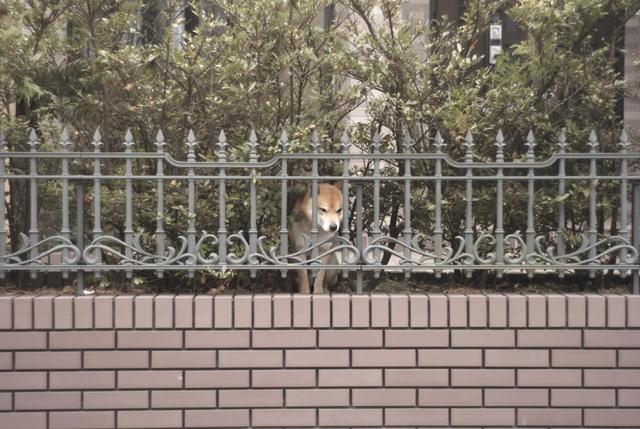 孤独なイヌ(引き)