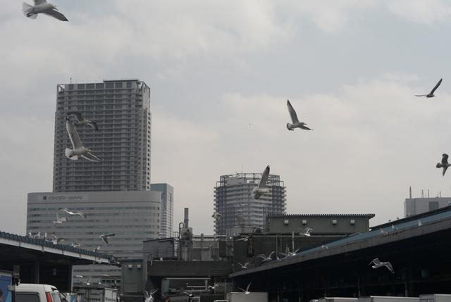 築地の昼の空