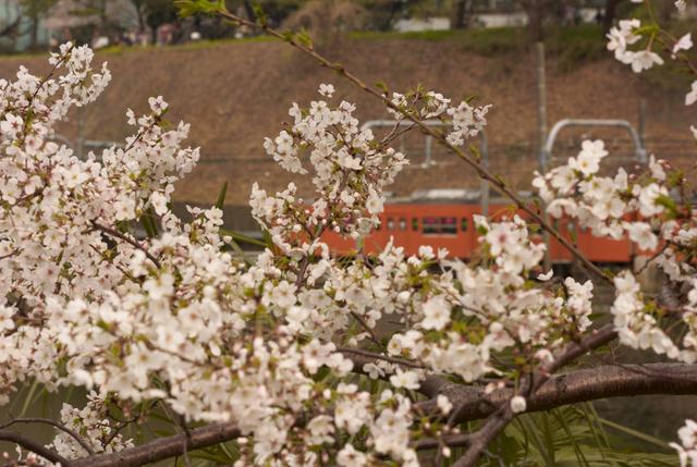 桜の風景・その8