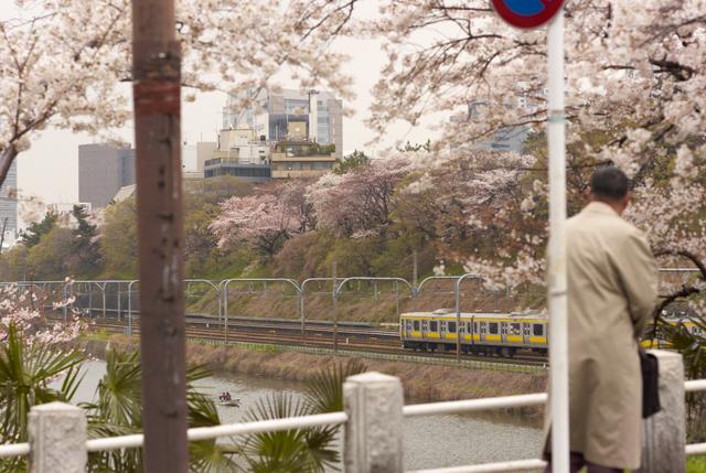 桜の風景・その9