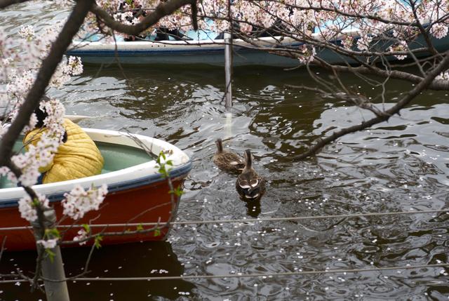 ボートの合間をぬって