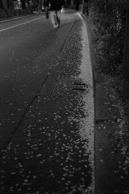 夜の桜・その2