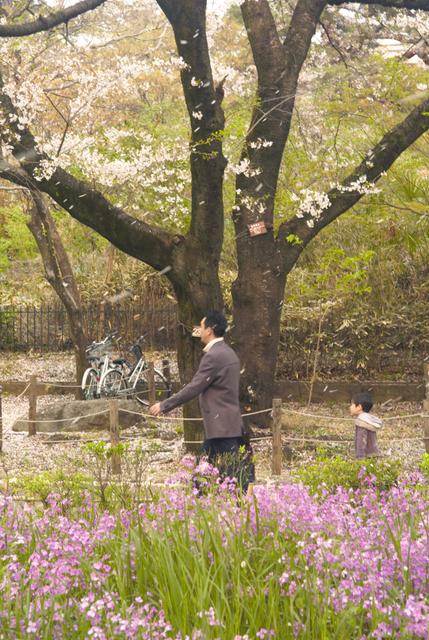 桜吹雪の中