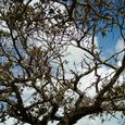 沖縄の木々