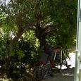 木陰で一休み