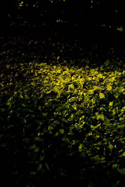 黄葉・その8