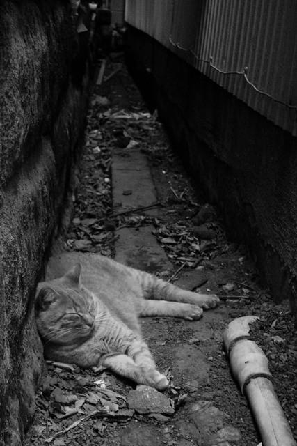 江ノ島の猫様