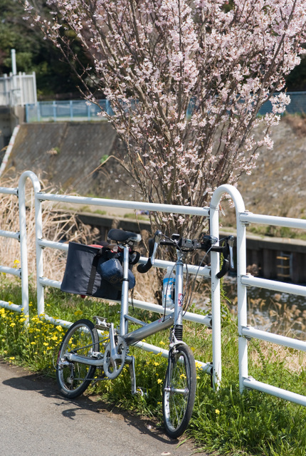桜とBSM