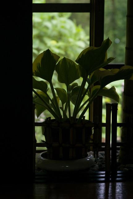 窓の内と外の緑