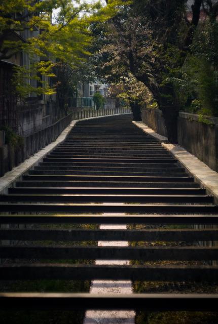桜の川・その3