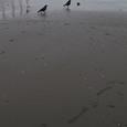 カラスが2羽