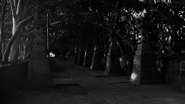 夕日が差す参道