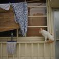 猫の待つ窓