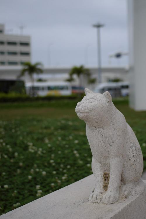 空を見る猫